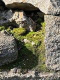 Kamień, zielony mech, lato, wiosna obrazy stock