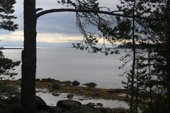 Kamieni drzew pustkowia wyspy plaży krajobraz Obraz Stock