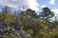 Kamieni i krzaków jesieni słoneczny dzień Zdjęcie Stock