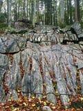 Kamieni palce jesień zdjęcia stock