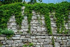 Kamieniarstwo ściana z pięcie zieleniami obrazy royalty free