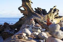 Kamienie brogujący na drzewo korzeniu Zdjęcie Stock