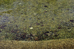 Kamienie i liście podwodni w sztucznym jeziorze Zdjęcia Royalty Free