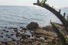 Kamienie i morze Zdjęcie Stock