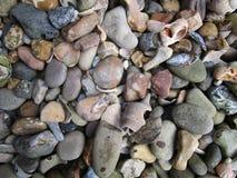 Kamienie i skorupy Fotografia Stock