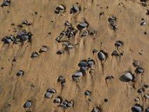 Kamienie na żółtej piasek plaży Zdjęcie Royalty Free