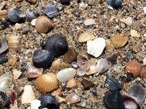 Kamienie na piasku Obraz Stock