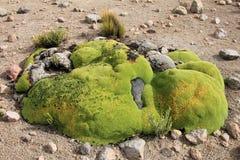 Kamienie przerastający z zielonym mech zdjęcie royalty free