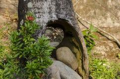 Kamienie w dudniącym drzewie zdjęcie royalty free