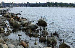 Kamienie w Fałszywej zatoczce schronienie Vancouver Zdjęcia Stock