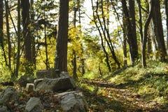 Kamienie w lasowej romantycznej drodze Zdjęcia Royalty Free