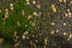 kamienie w mech i liściach w przedpolu obrazy royalty free
