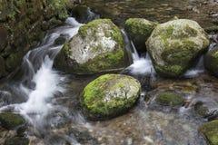 Kamienie w rzece Obraz Stock
