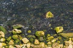 Kamienie w wodzie Fotografia Royalty Free