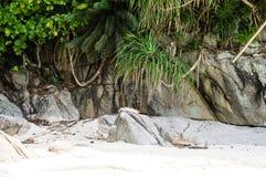 Kamienie zakrywający z lianami na białej piasek plaży żółwie przy Zdjęcie Royalty Free