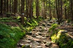 Kamienista ścieżka w drewnach Obrazy Stock