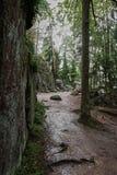 Kamienista ścieżka w lesie Fotografia Royalty Free