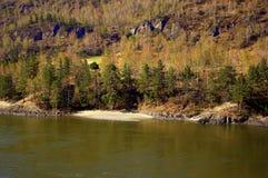 Kamienisty brzeg z piaskowat? pla?? Katun halna rzeka, zakrywaj?c? z iglastym lasowym Altai zdjęcie stock