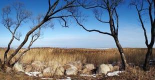Kamienisty wybrzeże zatoka Finlandia Blisko St Petersburg Rosja Obrazy Royalty Free
