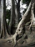 Kamienna ściana z porosłymi drzewnymi korzeniami Obrazy Royalty Free