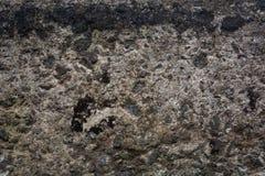 Kamienna ściana z zielonym mech tłem zdjęcie stock