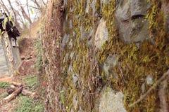 Kamienna ściana zakrywająca w grzybach w jesieni obrazy stock