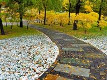 Kamienna ścieżka przez drewien zdjęcie royalty free