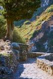 Kamienna ścieżka w ruinach kasztel Zdjęcia Royalty Free