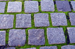 Kamienna ścieżka z liszajem Obraz Royalty Free