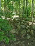 Kamienna ściana w drewnach Zdjęcie Stock