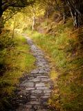 Kamienna droga przemian w jesień lesie z otaczającą trawą i drzewami Zdjęcia Royalty Free