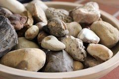 Kamienna i skamieniała kolekcja Fotografia Royalty Free