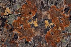 Kamienna powierzchnia z stubarwnymi mech i liszaju zbliżeniem Zdjęcie Royalty Free