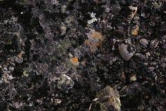 Kamienna powierzchnia z stubarwnymi mech i liszaju zbliżeniem Obrazy Royalty Free