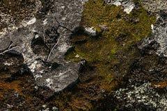 Kamienna powierzchnia z stubarwnymi mech i liszaju zbliżeniem Zdjęcie Stock