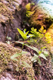 Kamienna roślina Obrazy Royalty Free