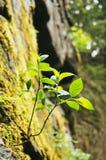 Kamienna roślina II Zdjęcie Royalty Free
