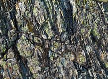 Kamienna tekstura z mech Obraz Stock