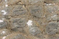 Kamienna tekstura z pęknięciami i garbkami zdjęcia royalty free