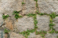 Kamienna trawy tekstura Obraz Royalty Free