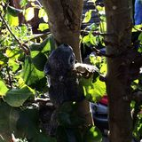 Kamienna wiewiórka Fotografia Stock