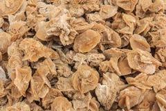 Kamienne pustynne róże fotografia stock
