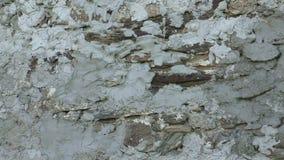 Kamiennej ściany powierzchnia z cementem zdjęcie wideo