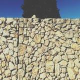 Kamiennej ściany drzewo Obrazy Royalty Free