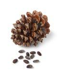 Kamiennej sosny ziarna i rożek zdjęcie royalty free