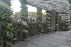 Kamienni filary z winogradami obraz stock