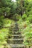 Kamienni schodki w lesie zdjęcia stock