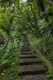 Kamienni schodki w zielenistym lesie i bujny Fotografia Royalty Free