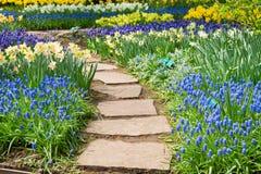 Kamienny ścieżki cewienie w ogródzie Zdjęcia Stock