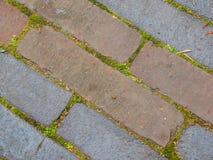 Kamienny brukowanie z mech Fotografia Stock